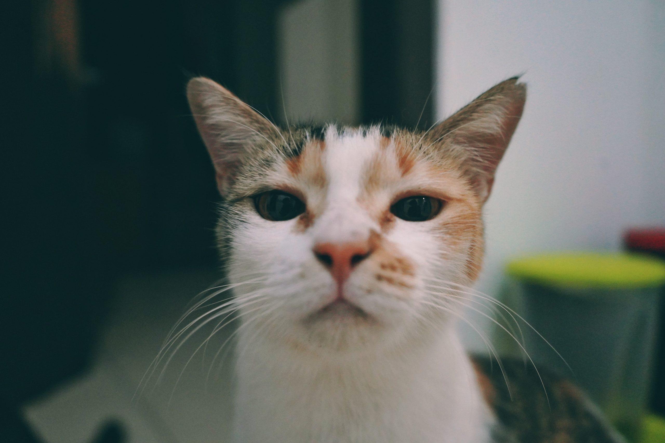 Jadi, Kamu Traveling dan Kucing-Kucingmu Jaga Rumah?